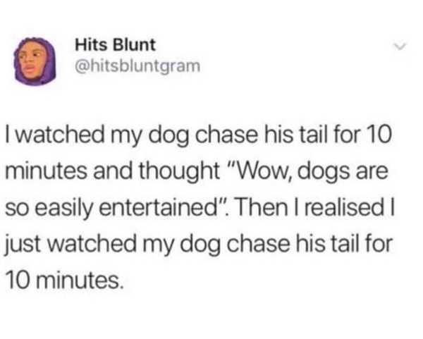 dog chased his tail