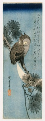 Owl on pine branch - Hiroshige