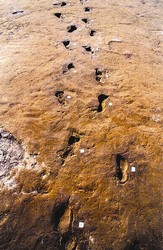 footprints in Vesuvius lava